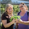 The Grow Native Nursery, located at Rancho Santa Ana Botanic Garden, has sold native species to the public for more than 30 years. The nursery opens on the first Saturday each November, attracting people from a wide area to purchase native plants. Teresa Crowe and Karen Deputy spent their morning learning from volunteers at the garden about the plants that would survive best in their home gardens in San Bernardino. / photo by Jasmin Miranda