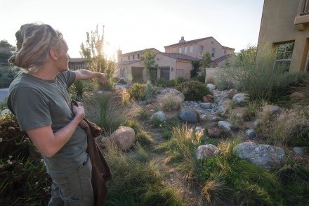 Geordie Schuurman, founder of Natural Earth, a sustainable landscaping company, points out his favorite features at Bryce Beseth and Gay Nakahara's Claremont home. Geordie modeled the yard after the  San Gabriel Mountains. / photo by Daniel Torres
