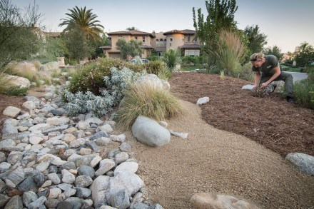 "Geordie Schuurman, from Natural Earth landscaping, adjusts the mulch around a seedling next to the dry river bed or ""arroyo"" modeled after a native Southern California landscape. All the rocks in Bryce Beseth and Gay Nakahara's Claremont yard were brought in by Geordie's crew from the nearby San Gabriel Mountains. / photo by Daniel Torres"
