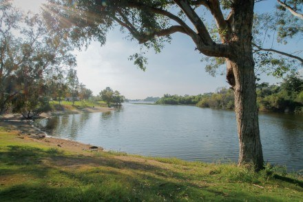 The warm sunlight reflects off the still water in Bonelli Park's Puddingstone Lake, a 250-acre artificial lake that was historically used as a flood control basin. Today, it is a place for visitors to enjoy recreational activities such as fishing, boating, water skiing and bird watching. The lake is home to more than 250 species of birds that can be observed year round. Bird life at the east end of the lake near the camp grounds is especially prolific because  it is protected from  motor boat activity. / photo by Emily Lau