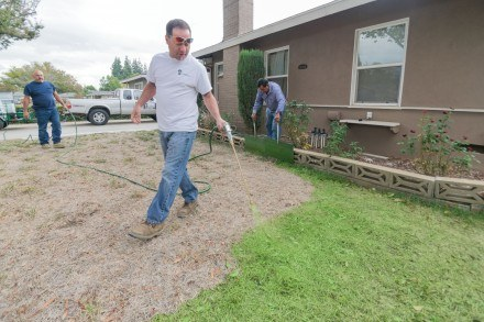 With the help of Angel Cabral and Jose Navarrette, Joe D'Angelo and his company Rate It G use a dye that features colorization and healthy growth on a La Verne lawn. Dyeing lawns is recently becoming popular in Southern California due to strict water restrictions. La Verne resident Diane Warner stopped watering her lawn due to city requirements. / photo by Nanor Zinzalian