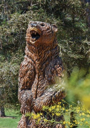 A statue of a grizzly bear, carved from a dead redwood tree, keeps watch over Ganesha Park in Pomona near the G. Stanton Selby Bandshell. The public art statue, carved by Irvine artist John Mahoney, is one of 14 sculptures he artistically crafted from dead trees in the park vicinity. Installed April 2017, the historical site labeling did not come without some dispute. The words on the dedication plaque were a matter of controversy between the Kizh and Tongva tribes, who both claim heritage ownership in the area of Ganesha Park. / photo by Natasha Brennan