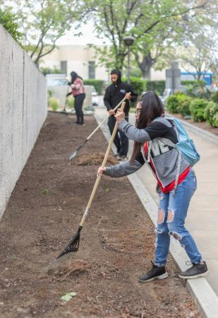 Hennessy Woods and members from  Justice 4 Youth, a non-profit organization based in Pomona, volunteer for Pomona's Beautification Day, led  by Council member Victor Preciado. / photo by Ashley Villavicencio