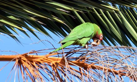 Parrot Pandemonium: Your Rainforest Soundtrack