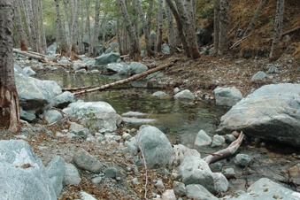 Hiking San Antonio Creek offers escape from the hurly-burly valley life.  / photo by Reina Santa Cruz