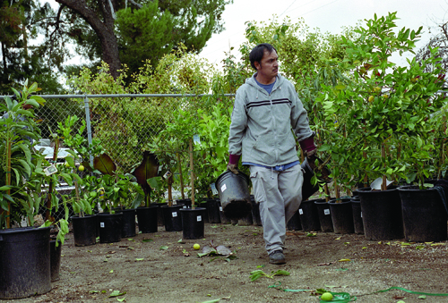 Jose L. Flores-Navarro has been with the La Verne Nursery for more than two years and helps maintain the production of the avocados, citrus, deciduous and subtropical fruits and nuts, along with grafted ornamentals. / photo by Veronica Garcia