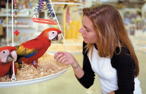 Showing affection, Michelle Manassee, manager of Omar's Exotic Birds, has an unspoken bond with her birds. / photo by Jenna Campbell