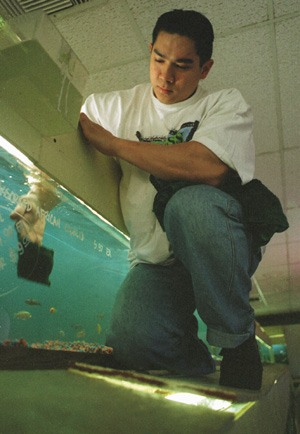 While scrubbing fish tanks may not sound like much of a workout, Ricky Syamsuri, a 24-year-old senior at Cal State Fullerton, admits that his duties range from rationing feeder crickets for customers to climbing on top of tanks. Syamsuri, who spends some of his free time lifting weights, works four days a week, six hours a day at the La Verne shop. / photo by Christie Reed