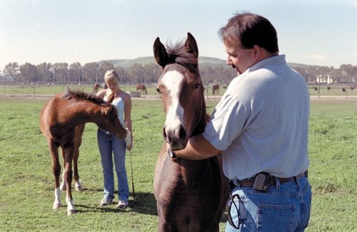 Eight-year leader of the Arabian herd, Jerry Liberatore, Kellogg Ranch Farm manager and equestrian coach, has made a winning connection with equines and students, including Cal Poly, Pomona show team member Tiffiny Schmidt. / photo by Jenna Campbell