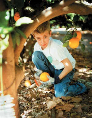 Kyle Bennett, 7, finds pleasure in the orange picking job. / photo by Tom Galaraga