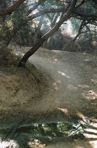 """Truly an enchanted forest and called such by the equestrians who ride through it, this area of the east-west trail in the hills north of La Verne, is crossed four times by the same stream. Bicyclists refer to the area as """"The Roller coaster."""" / photo by Christie Reed"""